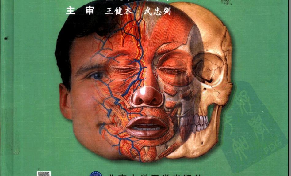 甲状腺细胞红蓝铅笔手绘图