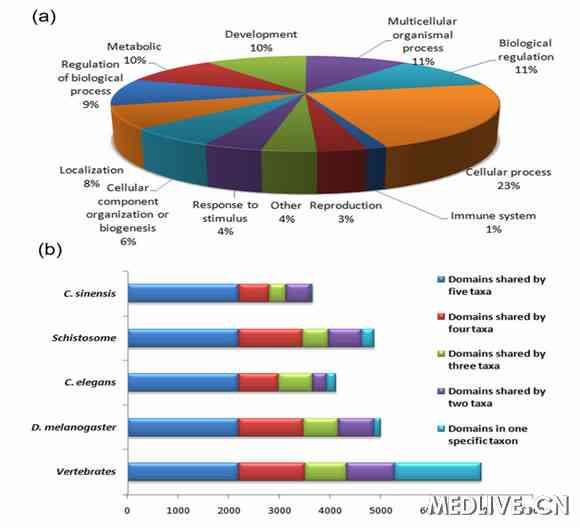 图 肝吸虫基因的功能分类图(a)和肝吸虫蛋白结构域特异性与其他物种