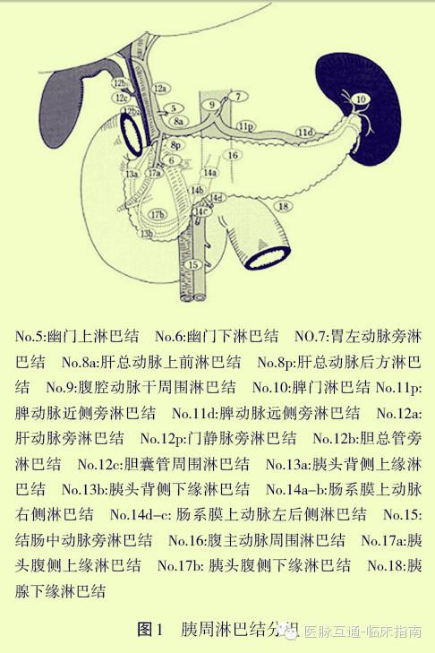 2013急性胰腺炎指南_【指南】胰腺癌诊治指南(2014)概要 业内新闻 中国临床肿瘤学会