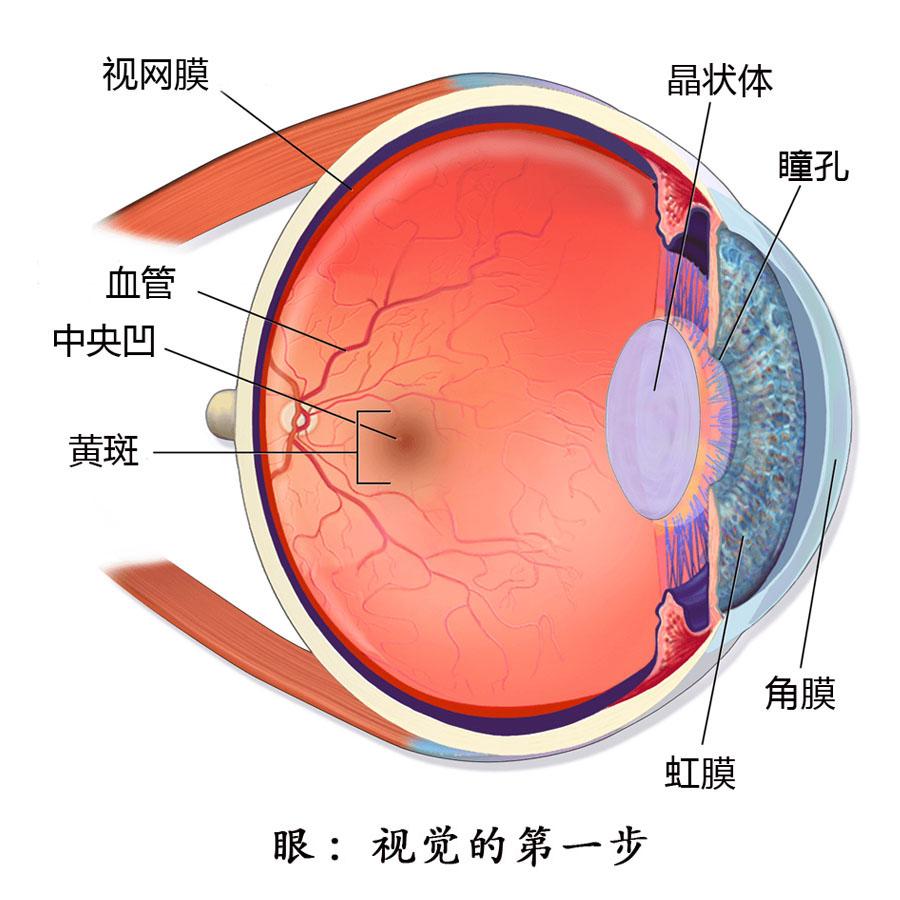眼睛教学图片素材