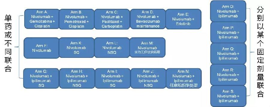 专家视角丨王哲海教授:免疫联合治疗--肿瘤治疗